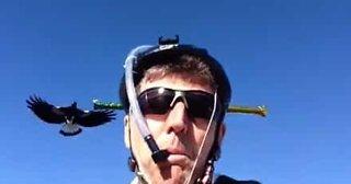 Syklist lager morsom hjelm for å avverge angrep fra aggresive fugler