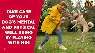 Top 3 Benefits Of Playing With Your Dog