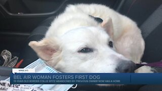 Bel Air woman's first foster dog