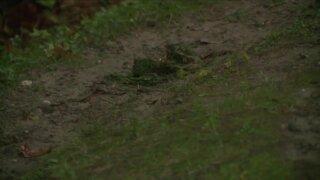 In-Depth: Growing Northeast Ohio rainwater runoff causes chronic flooding, erosion issues