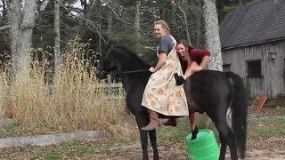Funniest Horse Fails