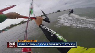 Kiteboarding dog reportedly stolen in St. Pete