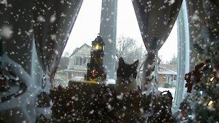 Cats invading Christmas Village