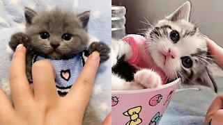 😍 Supper Cute Kittens In The World #8 - Cute VN