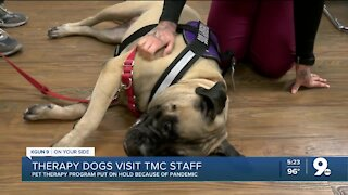 Therapy dogs visit TMC staff