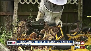 Cape Coral home owner terrorized by bees