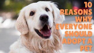 10 reasons why everyone should adopt a pet