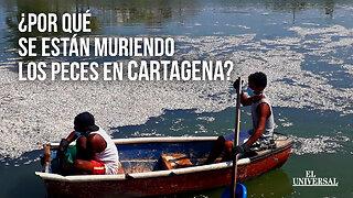 Esto dicen las autoridades sobre la mortandad de peces en Cartagena