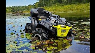 Swamp Things!!