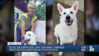 Dog sacrificed life to save owner