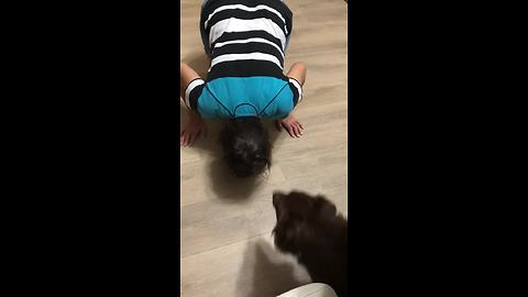Dog gets tricked into eating dinner