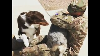 Dogs Welcoming Home Their Owners   Heart-Warming Compilation