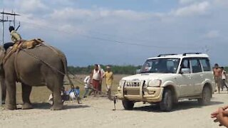 Elefant tauer bil i India