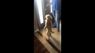 Dancing Doodle shows off adorably funny moves