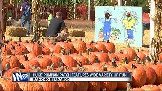 Halloween fun at pumpkin patch