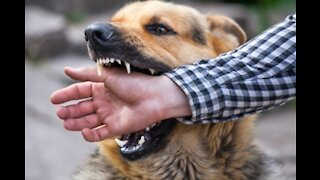how to defend yourself from a dog attack.