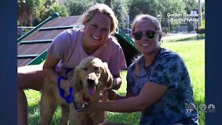 20 golden retrievers rescued from meat markets get new homes in Palm Beach County