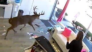 Deer crashes into a hair salon