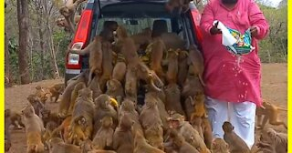 Would you feed monkeys like that?