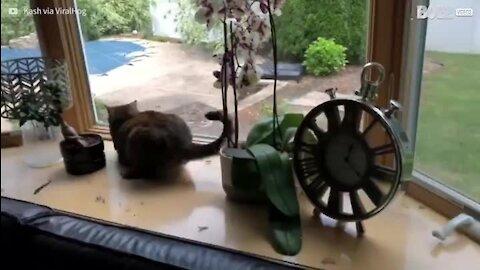 Pássaro é resgatado de gatas e é devolvido à natureza!