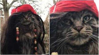 Denne katten kunne vært stjernen i 'Pirates of the Caribbean!'