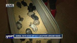Animal Days tease