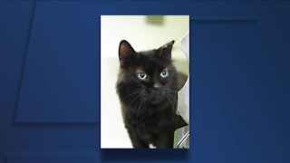 Cleveland APL Pet of the Weekend: Sweet, cuddly 14-year-old cat named Goofy