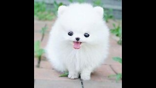 The Cutest Video You'll Ever Watch Today, Puppy Snowflake.