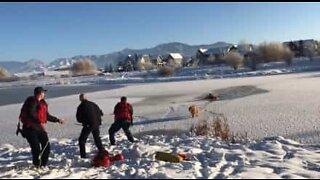 Koira pelastettiin jäätyneestä lammesta Montanassa