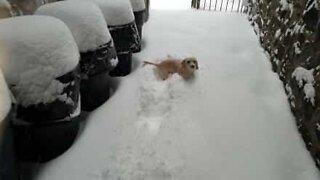 Søt valp elsker å leke i snøen!