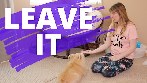 Teach Your Dog To Leave It - Positive Reinforcement Dog Training - Beginner Dog Training Series