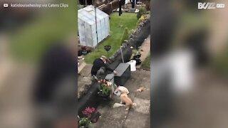 Cachorro compartilha amizade amorosa com vizinho