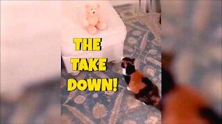 Cat takes down stuffed teddy bear!