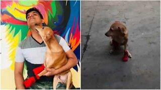 Skadet hund får proteser og går igjen!