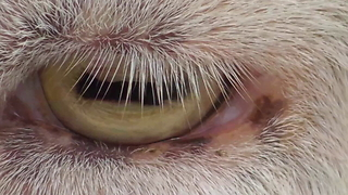 Close-up compilation of various animal eyes