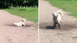 Funny pup loves to play in the mud every single day