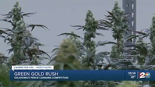 Green Gold Rush: Oklahoma's fierce cannabis competition