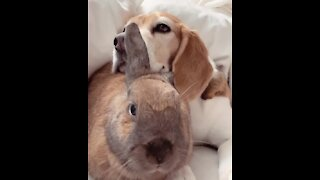 Dog and bunny best friends adorably cuddle with each other