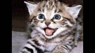 My cat cat cat