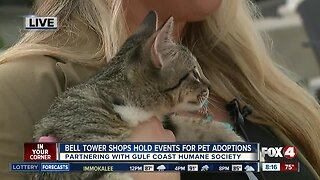 Bell Tower partners with humane society for pet events