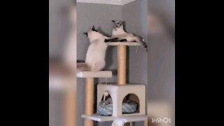 How siblings fight