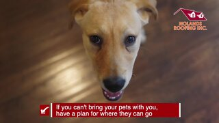 Keeping your pets safe | Tracking the Tropics Quick Tip