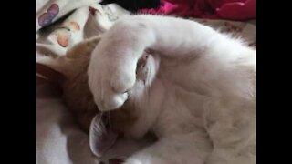 Ne pas déranger le chat qui dort...
