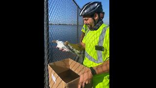 Bird rescued in West Palm Beach