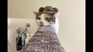 Cat relaxing on shower door framing