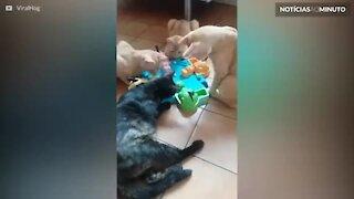 """Gatos curiosos tentam jogar """"Hipopótamos comilões"""""""