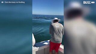 Enorme squalo bianco ruba il bottino ai pescatori