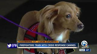 Firefighters train with crisis response canines