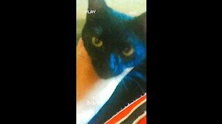 I have black panther