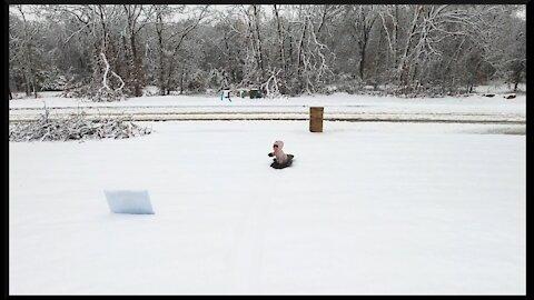 Crazy Odd Snow Storm in Oklahoma ~ Let's Sled